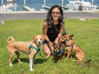Dog Training in Playa Vista