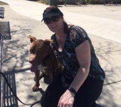 Pit bull dog training
